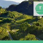 TeMa Geo Solutions - La tutela del paesaggio vitivinicolo
